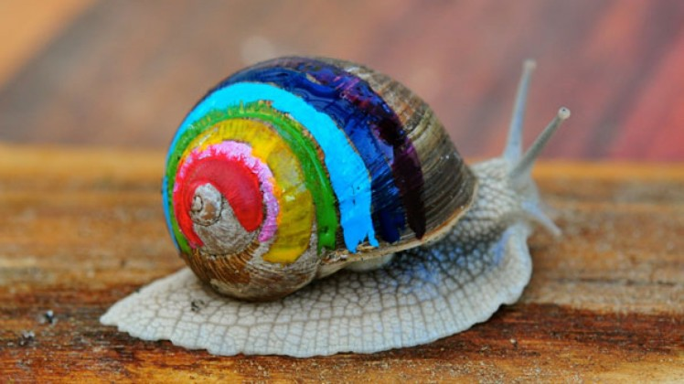 Painted-Snail-Shell-6-1600x900