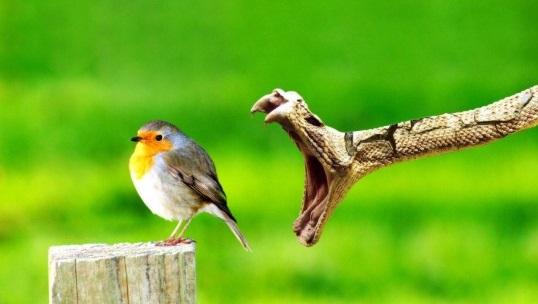 snak bites bird