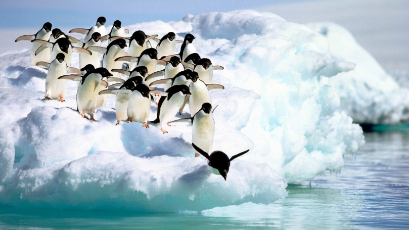 Adelie Penguins Diving into Water (Composite)